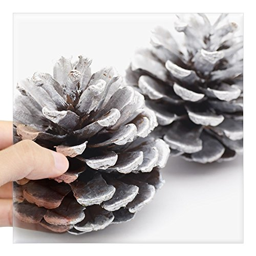 CafePress Silver Pine Cones Square Sticker 3