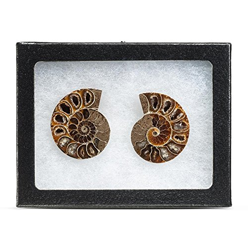 KALIFANO Extinct Natural Ammonite Shell Pair Fossil Stone - Madagascar by ALEXANDER KALIFANO (Image #2)