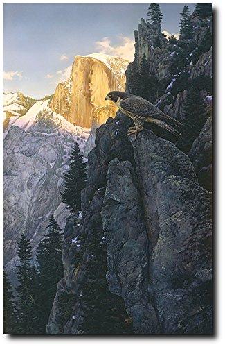 Return of the Falcon by Stephen Lyman - Anniversary Ed Canvas - Peregrine Bird
