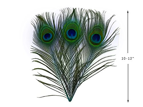 10 Peacock Feathers | 10 Pieces - 10-12