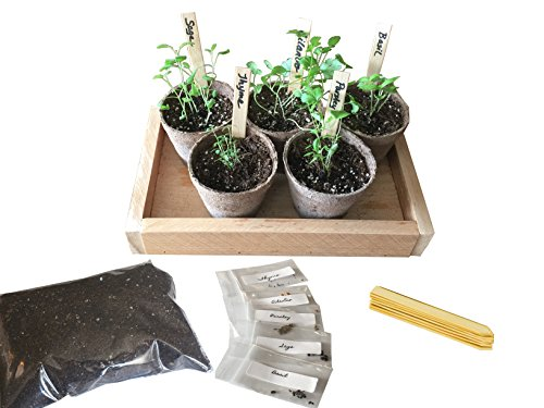 Herb Garden Growing Kit - Grow Your Own Herbs from Seed - Our Growing Set Contains Everything You Need - Planting Pots, Seeds, Labels, Soil, Instructions and a Holding Tray (Herb-Natural) by BackyardCedars