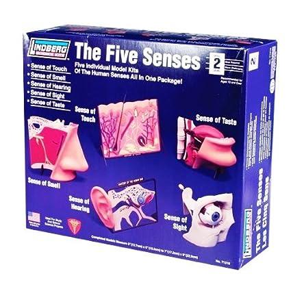 Amazon.com: Lindberg Human 5 Senses Anatomy Science Project Model ...