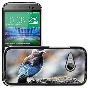 Hot Style Cell Phone PC Hard Case Cover // M00116192 Bird Alaska Nature Animal Wildlife // HTC One Mini 2 / M8 MINI / (Not Fits M8)