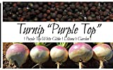 Liliana's Garden Turnip Seeds - Purple Top, White Globe - Heirloom