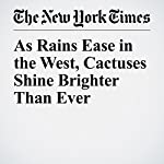 As Rains Ease in the West, Cactuses Shine Brighter Than Ever | Natalie Angier
