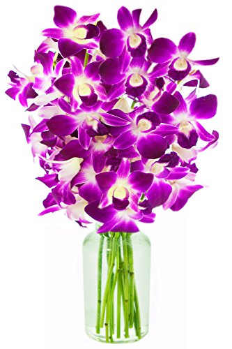 Purple Orchid Bouquet (KaBloom The Ultimate Purple Orchid Bouquet of 10 Exotic Purple Dendrobium Orchids from Thailand with Vase)