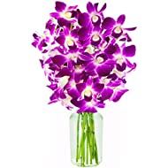 The Ultimate Purple Orchid Bouquet of 10 Exotic Purple Dendrobium Orchids from Thailand with Free Vase Included