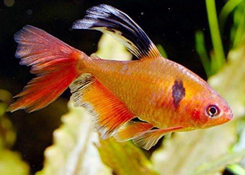 تربية الاسماك في الاحواض المنزلية
