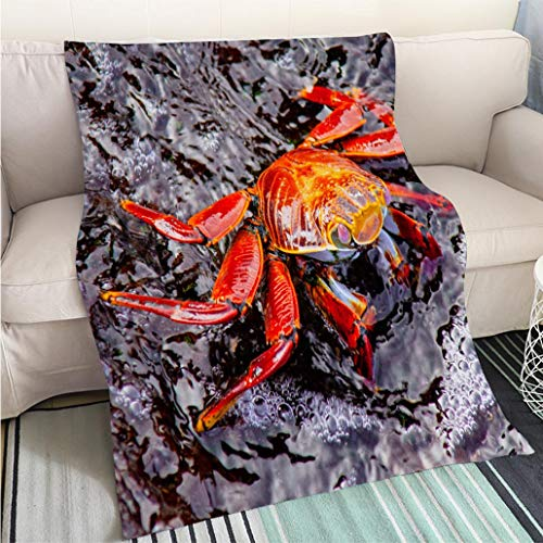 BEICICI Home Digital Printing Thicken Blanket Sally Lightfoot Crab on Rock Sofa Bed or Bed 3D Printing Cool Quilt
