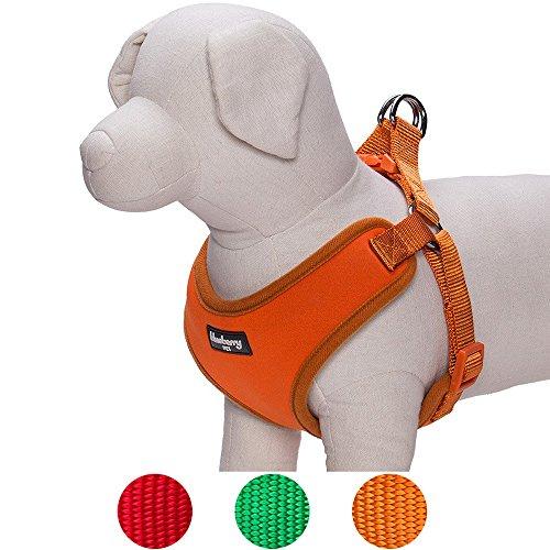 Small Dog Harness: Amazon.com