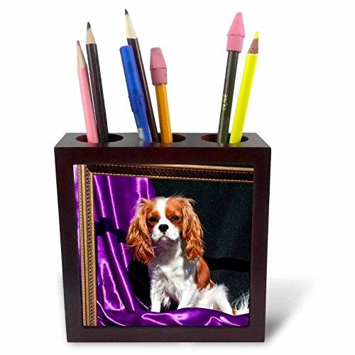 3dRose ph_88806_1 A Cavalier King Charles Spaniel Dog - US05 ZMU0132 - Zandria Muench Beraldo - Tile Pen Holder, 5-Inch