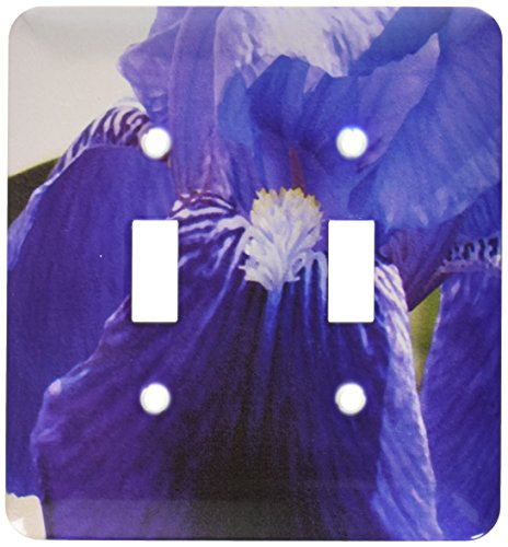 3dRose LSP_50788_2 Purple Iris Oil Painting Toggle Switch ()