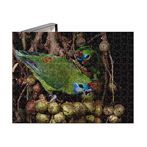 Media Storehouse 252 Piece Puzzle of Double-eyed fig-parrot (Cyclopsitta diophthalma) (10116067) - Fig Parrot