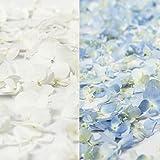 Farm Fresh Natural 1/2 white 1/2 blue Hydrangea Petals - 16 PK.