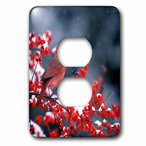 3dRose Danita Delimont - Cardinal - Northern Cardinal male in Common Winterberry in winter - Light Switch Covers - 2 plug outlet cover (lsp_250942_6)
