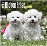 Bichon Frise Puppies 2015 Square 12x12