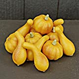 Mini Yellow Pumpkin & Gourd Filler