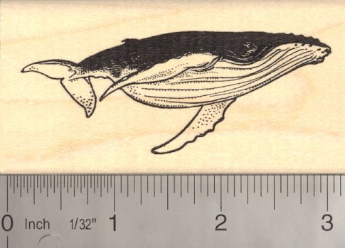 Humpback Whale (Baleen) Rubber Stamp