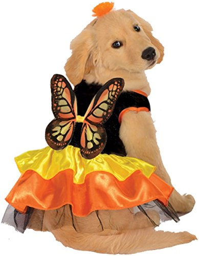 Rubie (Large Breed Dog Halloween Costumes)