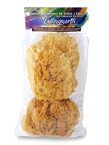 - Natural Sea Sponges for Artists - Unbleached 5