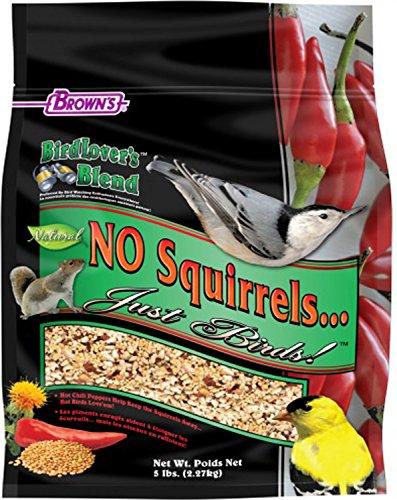 Bird Lover'S Blend? No Squirrels...Just Birds