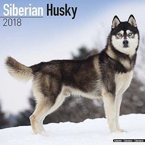Siberian Husky Calendar 2018 - Dog Breed Calendar - Premium Wall Calendar 2017-2018