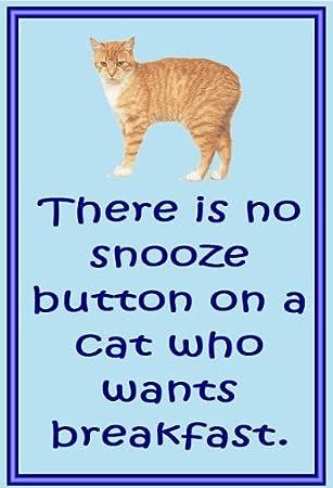 Manx Gato - Novedad Gato imanes de nevera - repetición - Regalos para dueños de gatos: Amazon.es: Hogar