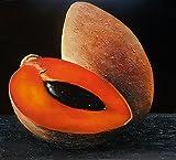 zapote fruit - Mamey Sapote / Zapote (SET OF 2)