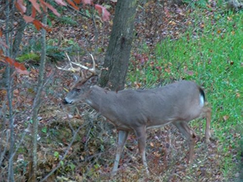 Old Timer Takes Great Pennsylvania Buck with Perfect Crossbow Shot