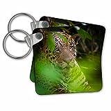 Danita Delimont - Jaguars - Brazil, Pantanal,. A male jaguar hiding in bushes. - Key Chains - set of 2 Key Chains (kc_278204_1)