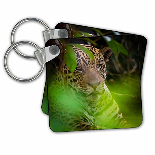 Danita Delimont - Jaguars - Brazil, Pantanal,. A male jaguar hiding in bushes. - Key Chains - set of 2 Key Chains (kc_278204_1) by 3dRose