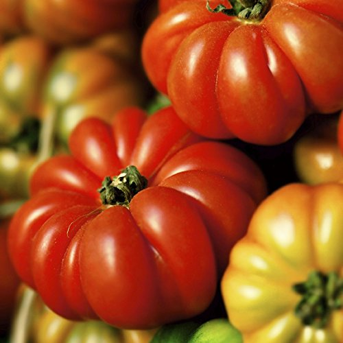Tomato Seeds - Costoluto Genovese - Packet, Vegetable Seeds