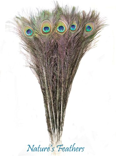 Femitu 25 Real Natural Peacock Feathers 20-25 Inches