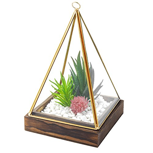 MyGift Pyramid Glass & Gold Trim Cover Succulent Terrarium with Torch Wood Base