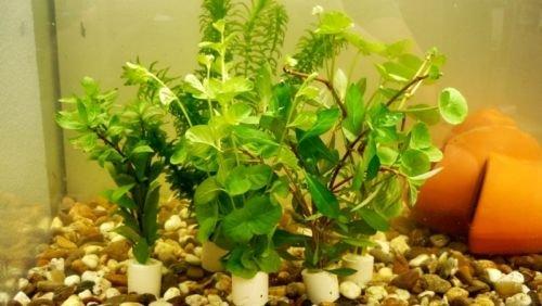 Kaltwasser-Set 5 Bund Aquaqriumpflanzen,Wasserpflanzen