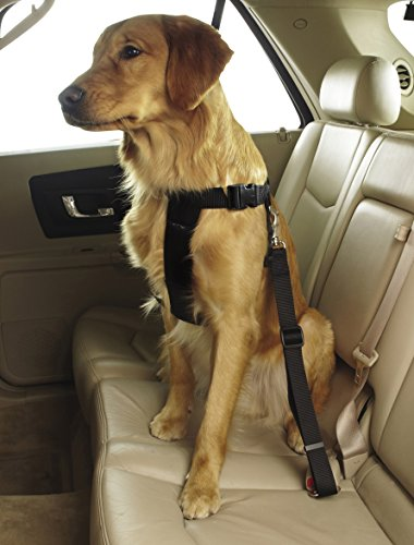 Guardian Gear Ride Right Classic Car Harnesses — Sturdy Nylon Harnesses for Dogs - Large, Black by Guardian Gear