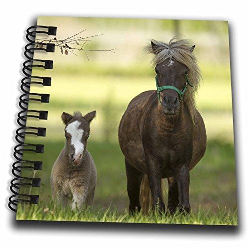 Miniature Notepad (3dRose Danita Delimont - Horses - Miniature horse family - Mini Notepad 4 x 4 inch (db_278883_3))