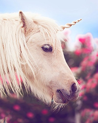 Top 10 recommendation horse unicorn horn halter for 2019