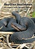 Reptilien bestimmen: Eier, Jungtiere, Adulte, Häutungen, Totfunde (Zeitschrift f. Feldherpetologie - Supplemente)