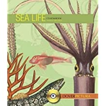 Sea Life (Dover Pictura Electronic Clip Art)