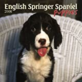 English Springer Spaniel Puppies 2006 Calendar