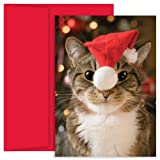 Hortense B Hewitt Holiday Greetings, Festive Cat, Box of 18
