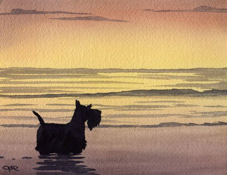 Scottish Terrier Sunset Dog Art Print By Artist DJ Rogers (Terrier Dog Art Scottish)