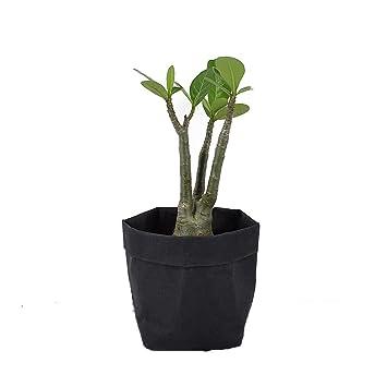 Amazon agarden flower pots for succulents cactus black washable agarden flower pots for succulents cactus black washable kraft paper multi purpose storage bag flower mightylinksfo