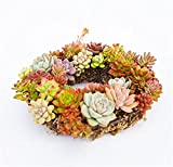 Danmu Rustic Iron Wire Wreath Frame Succulent Pot Iron Hanging Planter Plant Holder (Plants Are Not Included) (Style 2)