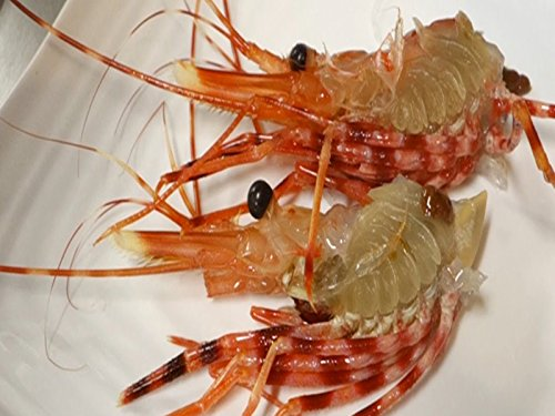 (Graphic Live Shrimp Sushi And Live Shrimp)