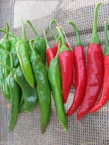 Korean Hot Pepper (GO-CHU) Great for,GO-CHU-JANG-Korean Chili Paste- 25 Seeds