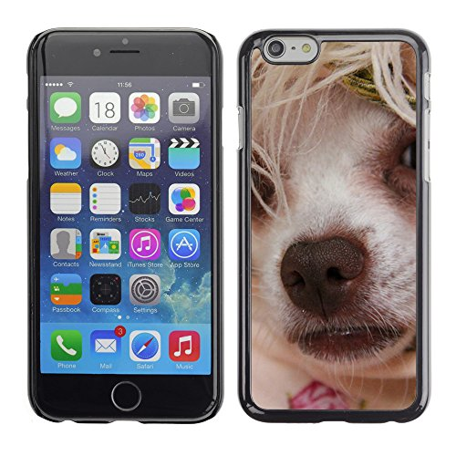 """Premio Sottile Slim Cassa Custodia Case Cover Shell // F00007886 petit chien // Apple iPhone 6 6S 6G 4.7"""""""