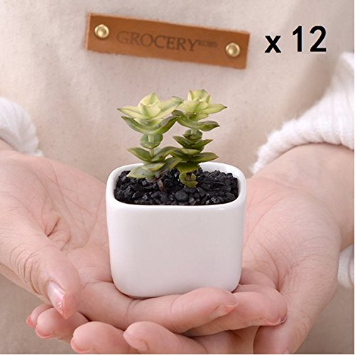 Chris.W White Mini Square Modern White Ceramic Succulent Planter Pots w/ Drainage Hole, Set of 12, 2x2x1.65 Inches (Plants Are NOT Included)
