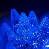 70 C6 Blue LED String Lights, 24 Ft, Indoor-Outdoor Christmas String Lights for Bedroom Dorm Room Lights Outdoor Tree Lights Blue Light Set